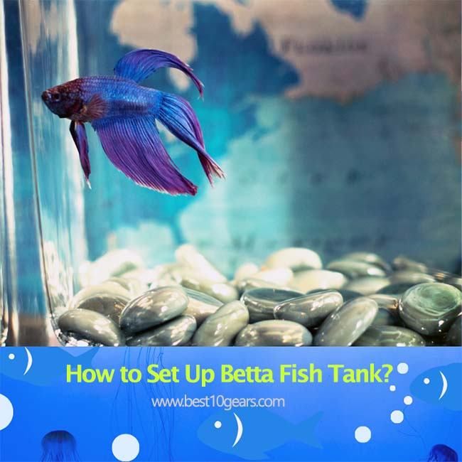 how to set up a betta fish tank
